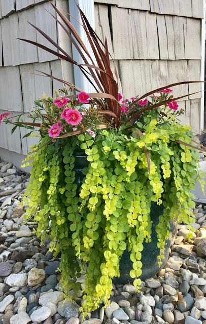 Container Gardening:  How to create beautiful flower pots with the Thriller, Spiller, Filler method!  Midwestern Mama